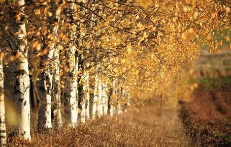 Tri jeseni