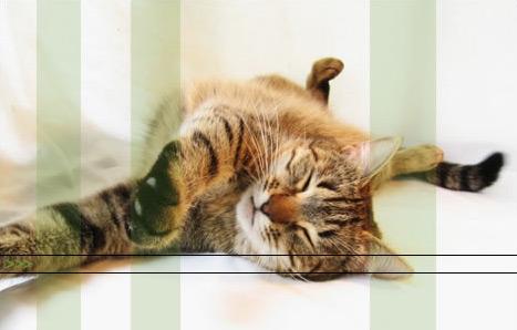 Mačje pismo