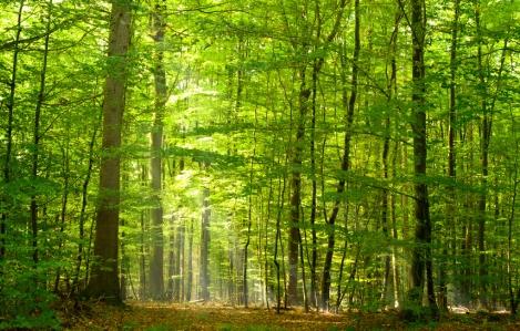Golmanu, lovcu i šumaru
