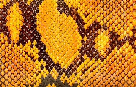 San žutih zmija
